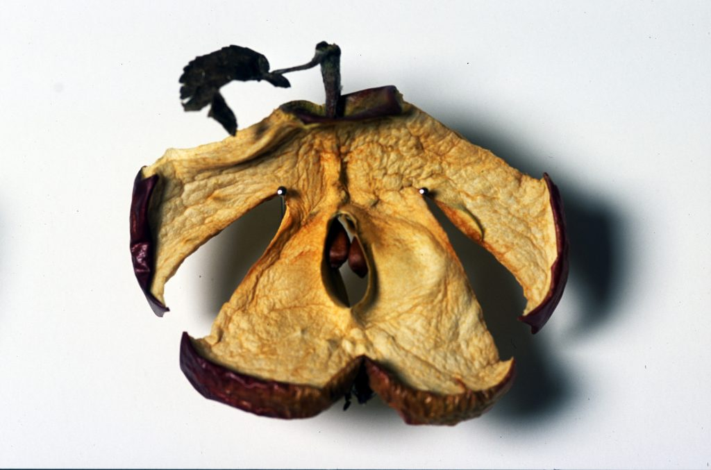A dried apple, cut in the form of an apple, in earthy tones, with a stem and dried leaf.